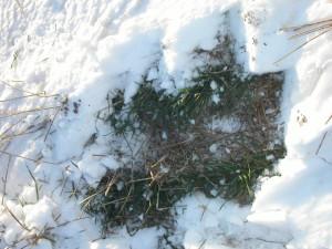 basement-waterproofing-winter-frost-heave